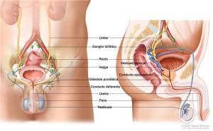 Información general sobre el cáncer de testículo